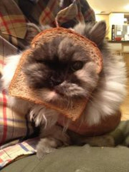 http://trinixy.ru/pics5/20120202/sandwich_10.jpg