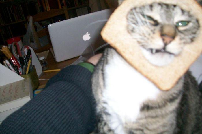 http://trinixy.ru/pics5/20120202/sandwich_13.jpg
