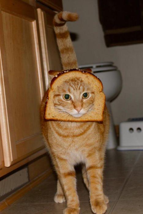 http://trinixy.ru/pics5/20120202/sandwich_18.jpg