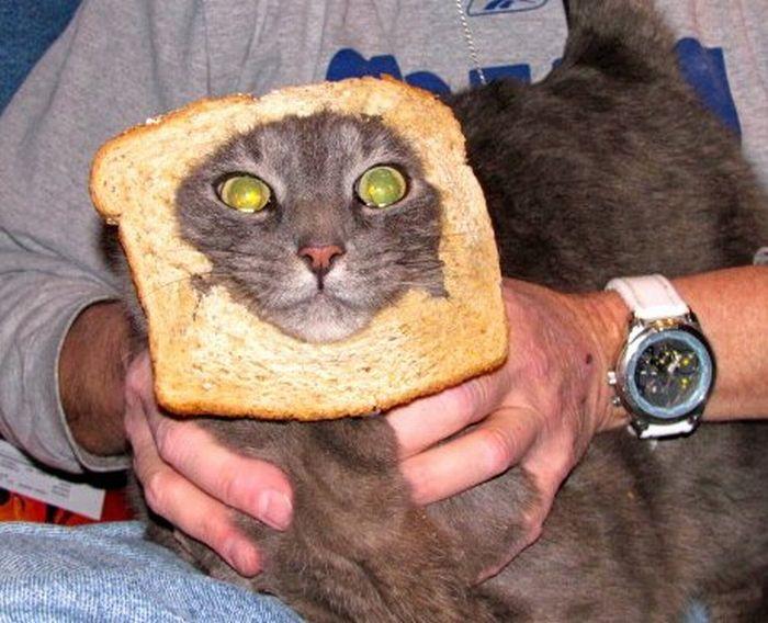 http://trinixy.ru/pics5/20120202/sandwich_21.jpg