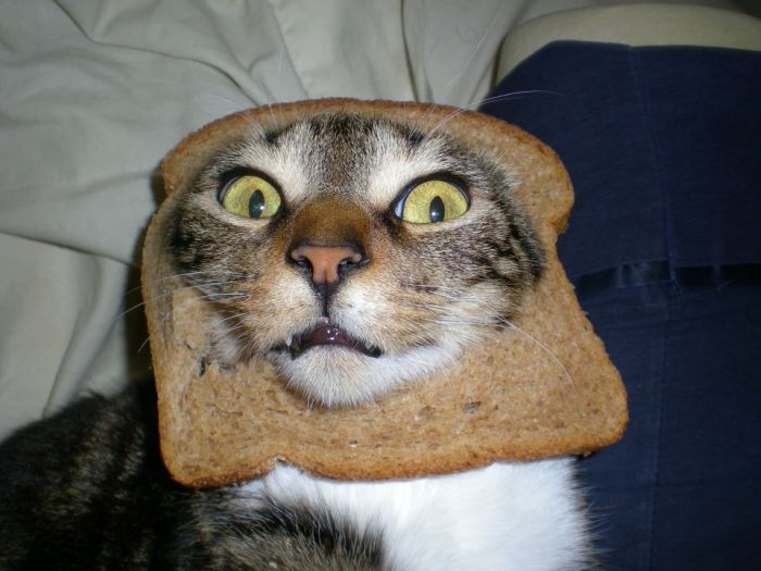 http://trinixy.ru/pics5/20120202/sandwich_25.jpg