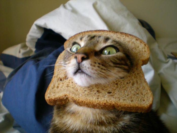 http://trinixy.ru/pics5/20120202/sandwich_26.jpg