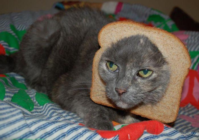 http://trinixy.ru/pics5/20120202/sandwich_29.jpg