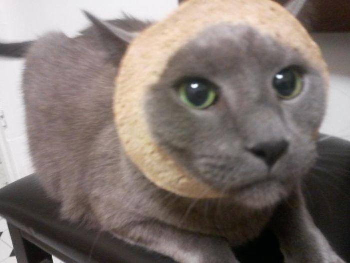 http://trinixy.ru/pics5/20120202/sandwich_31.jpg
