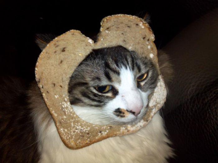 http://trinixy.ru/pics5/20120202/sandwich_32.jpg
