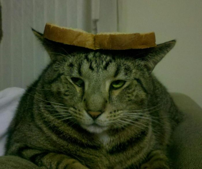 http://trinixy.ru/pics5/20120202/sandwich_34.jpg