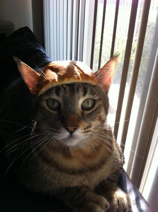http://trinixy.ru/pics5/20120202/sandwich_35.jpg