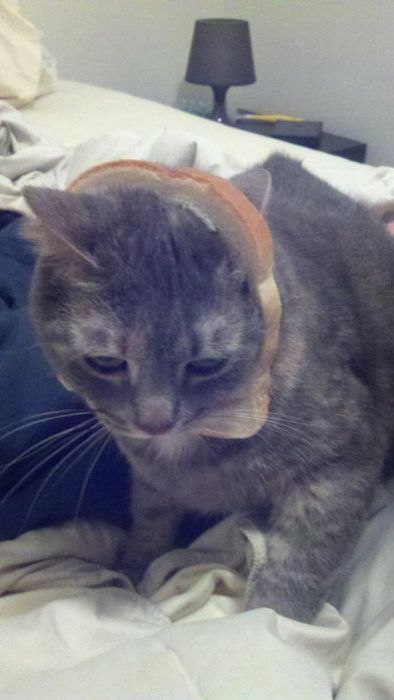 http://trinixy.ru/pics5/20120202/sandwich_36.jpg
