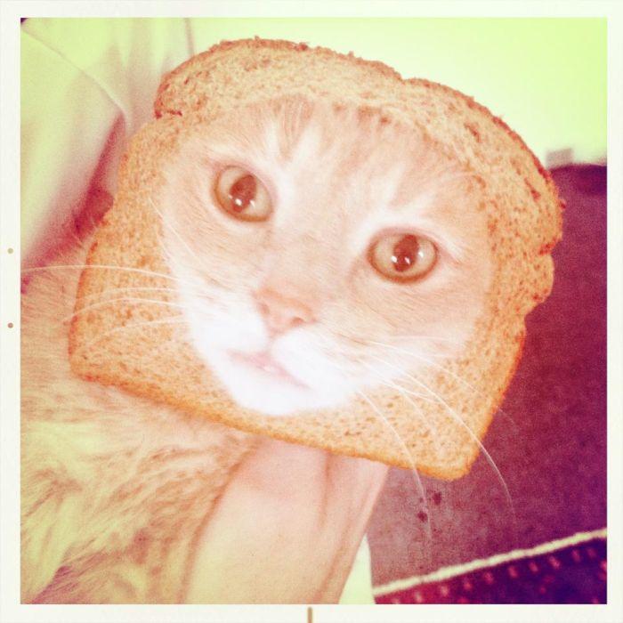 http://trinixy.ru/pics5/20120202/sandwich_37.jpg