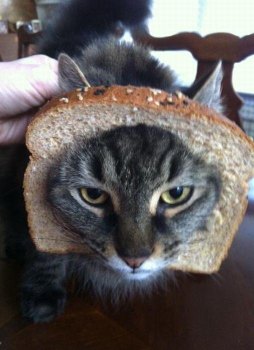 http://trinixy.ru/pics5/20120202/sandwich_38.jpg