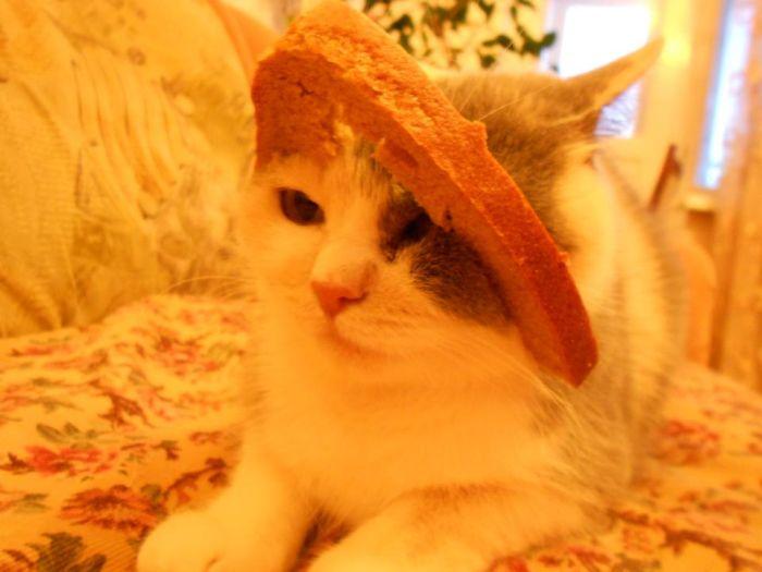 http://trinixy.ru/pics5/20120202/sandwich_39.jpg