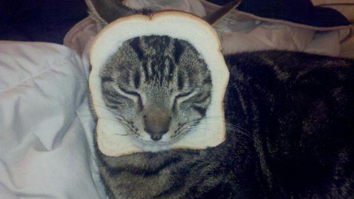 http://trinixy.ru/pics5/20120202/sandwich_40.jpg