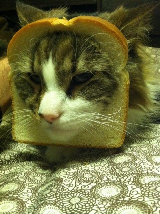http://trinixy.ru/pics5/20120202/sandwich_41.jpg