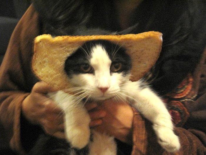 http://trinixy.ru/pics5/20120202/sandwich_44.jpg