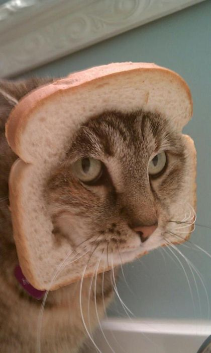 http://trinixy.ru/pics5/20120202/sandwich_46.jpg