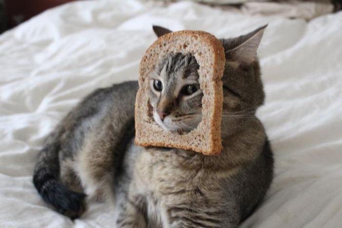 http://trinixy.ru/pics5/20120202/sandwich_47.jpg