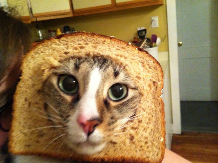 http://trinixy.ru/pics5/20120202/sandwich_50.jpg