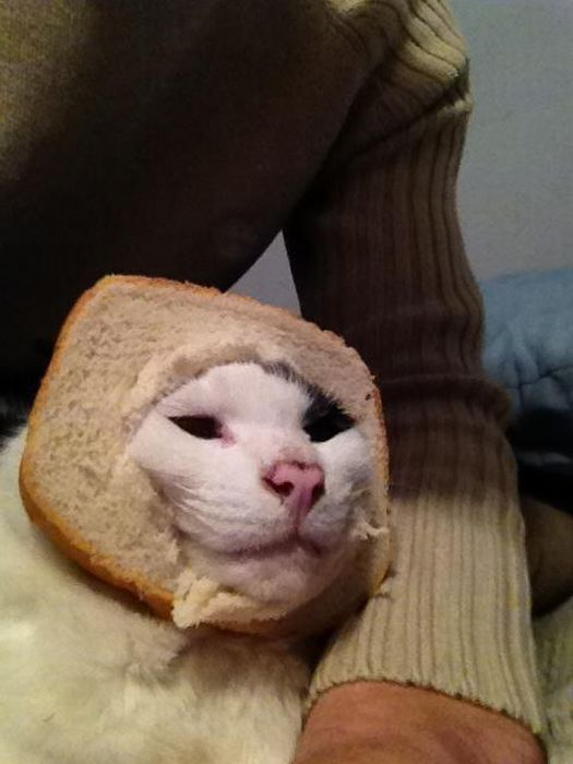 http://trinixy.ru/pics5/20120202/sandwich_51.jpg