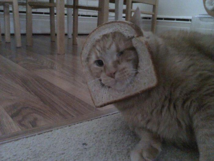 http://trinixy.ru/pics5/20120202/sandwich_52.jpg