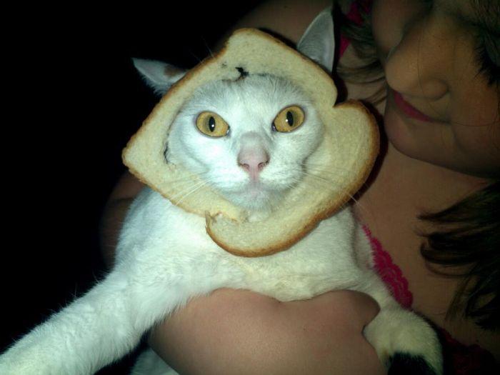 http://trinixy.ru/pics5/20120202/sandwich_56.jpg