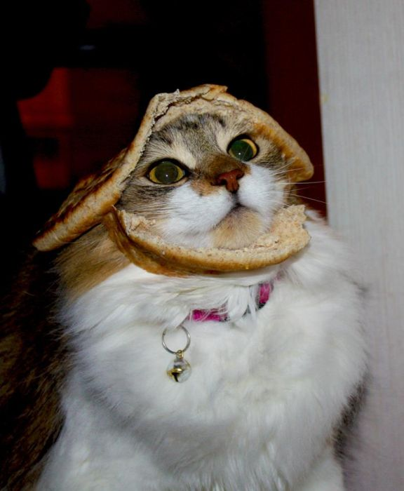 http://trinixy.ru/pics5/20120202/sandwich_60.jpg