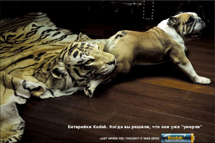 Рекламный креатив (53 фото)