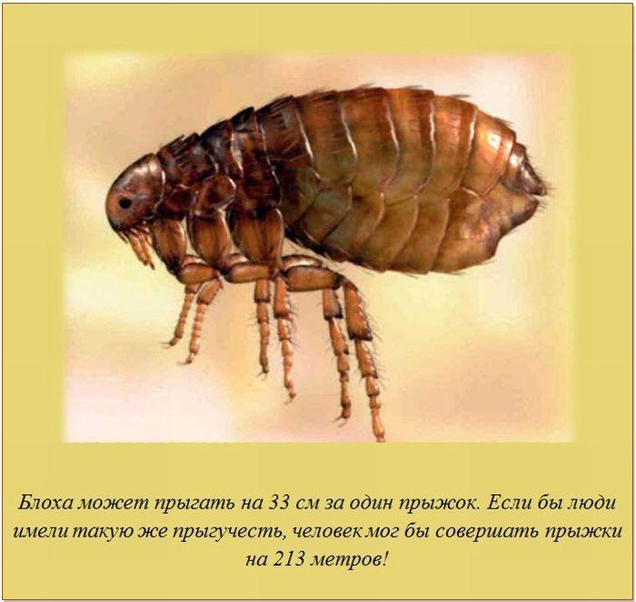 Имейте в виду, эта беда не приходит одна: крысы, мыши, тараканы, муравьи.