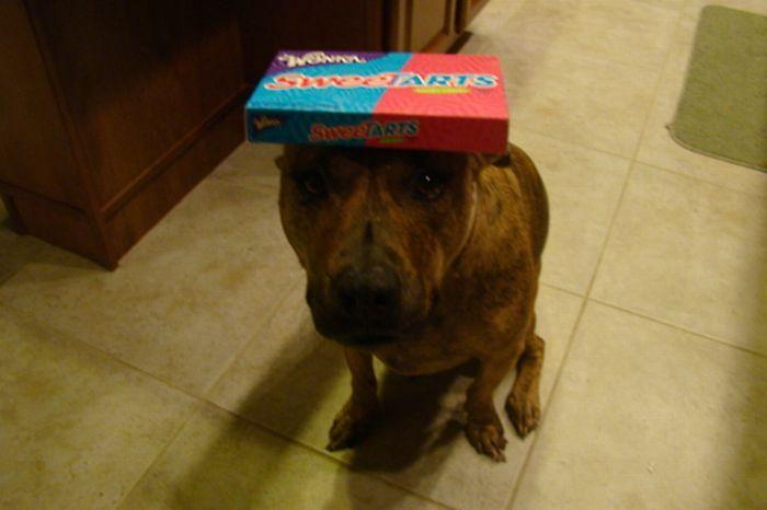 Собака, которая не любит еду (59 фото)