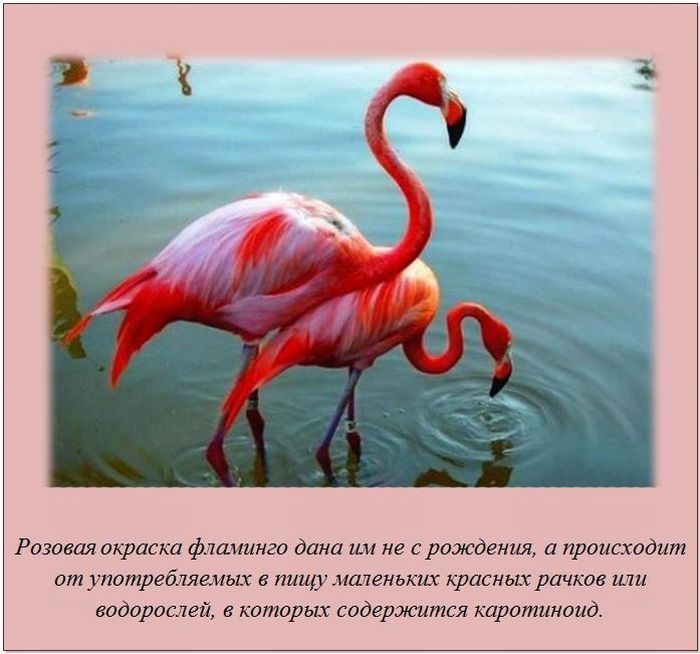 http://cdn.trinixy.ru/pics5/20120207/fakti_14.jpg