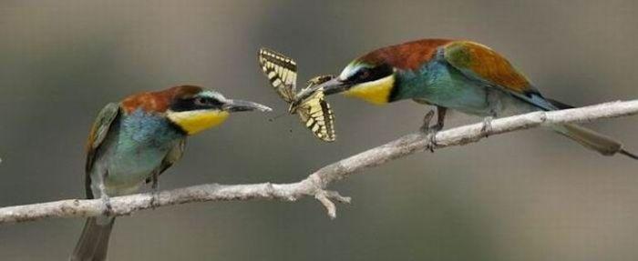 Бабочка в подарок (5 фото)