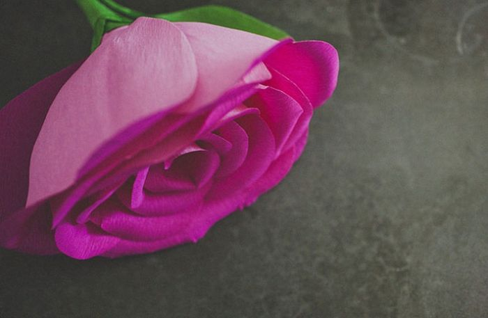 Как сделать гигантские розы (15 фото)