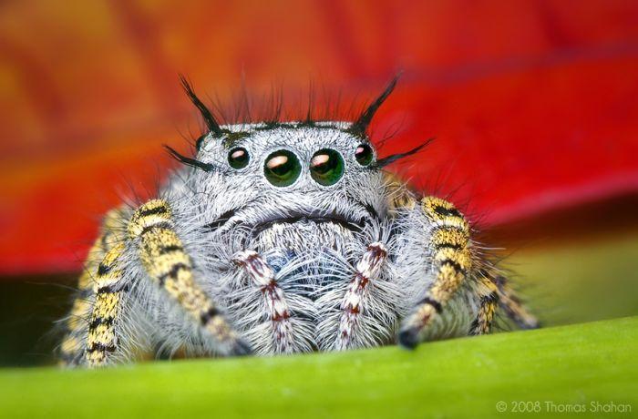 Сногсшибательные макрофотографии насекомых (28 фото)