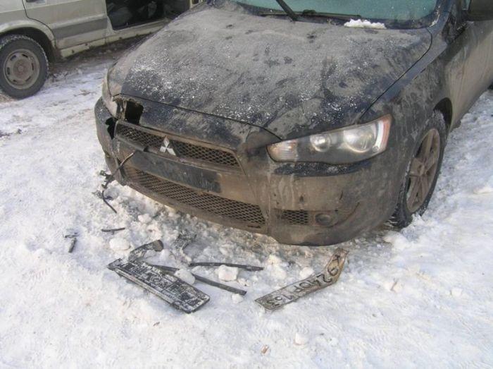 Собаки разорвали автомобиль (9 фото)