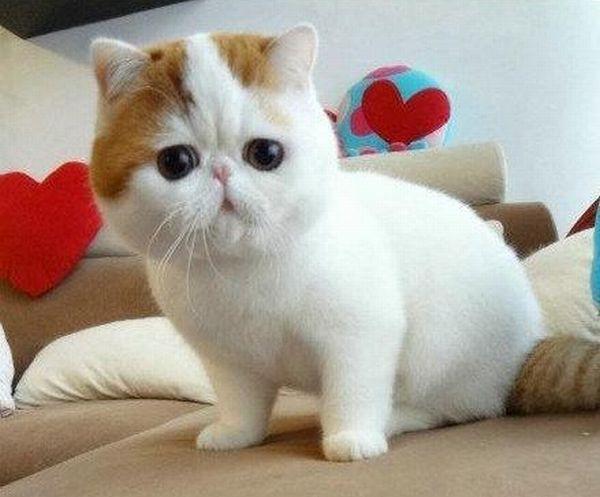 Славный котенок (7 фото)