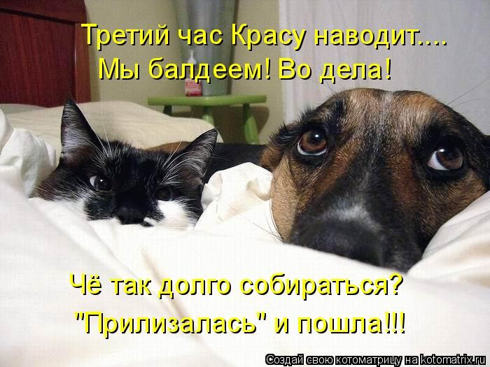 Котоматрица: У собаки он виноватый.  У кота нагловатый взгляд, Почему же они так глядят?  И сардельки исчезли куда-то.