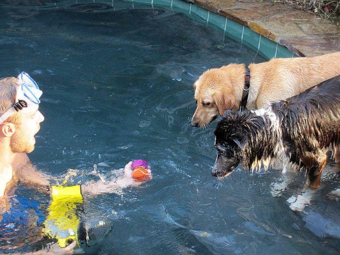 Ныряющие собаки (18 фото)