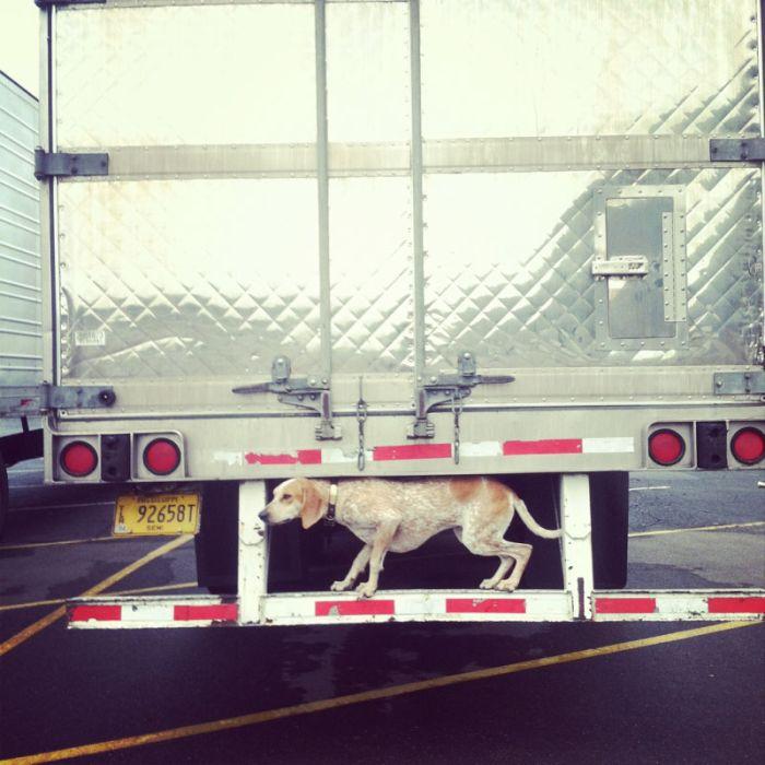 Собака, которая стоит по стойке смирно (20 фото)