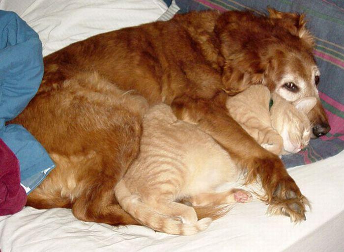 Как кошка с собакой (20 фото)