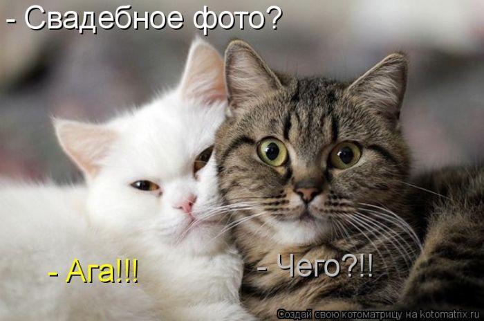 http://trinixy.ru/pics5/20120217/kotomatrix_25.jpg