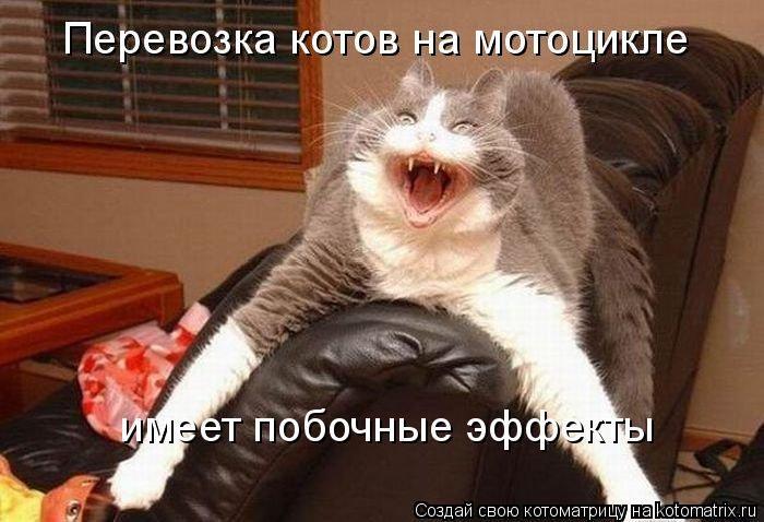 http://trinixy.ru/pics5/20120217/kotomatrix_47.jpg