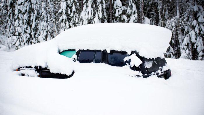 Пленик снежной бури (7 фото)