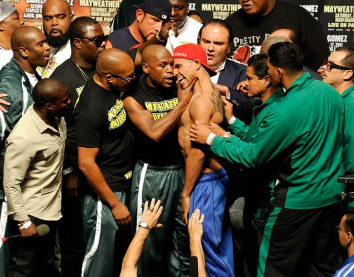 Боксеры-задиры (15 фото)