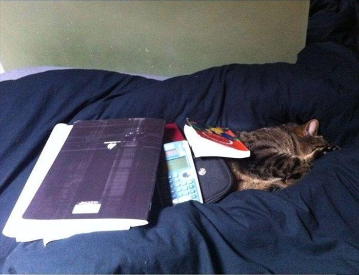 У кошек самый крепкий сон (17 фото)