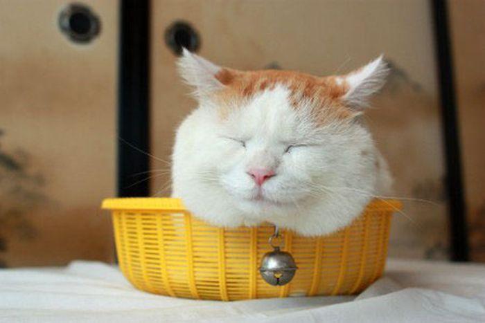 Как же любят котейки в домике сидеть. А когда один он на двоих - не