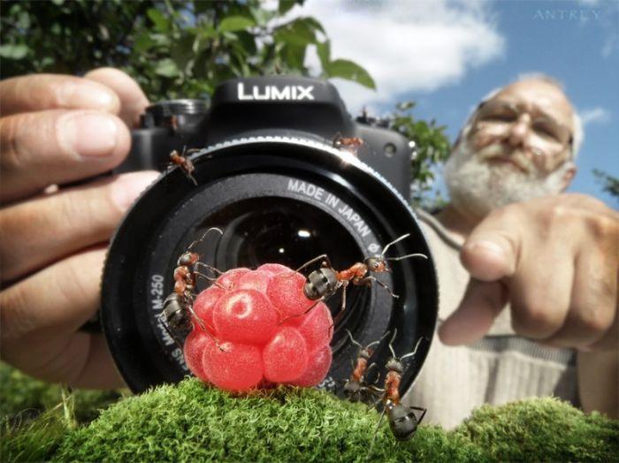Муравьиная жизнь (28 фото)