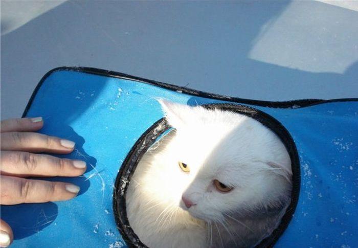 Две девушки спасли кота (8 фото)