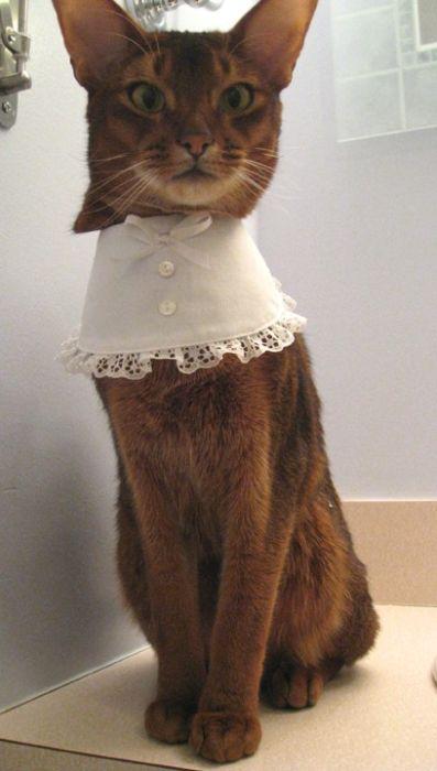 60. Оказывается, у кошек тоже есть свои модные предпочтения и стильная