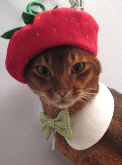 Оказывается, у кошек тоже есть свои модные предпочтения и стильная