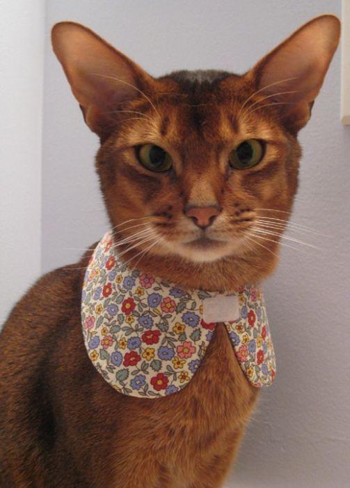 Шляпы для котов (фото) - Салідарнасць.