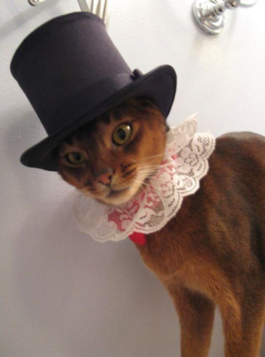 Котэ,прикольные картинки с кошками,картинки котэ,котэ. продолжение по